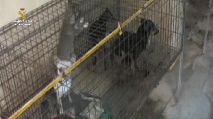 La Guardia Civil desmantela un criadero que comercializaba perros de raza con documentación falsa