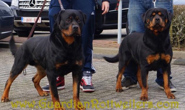 Amsterdam18Mar13_0040_edited-1