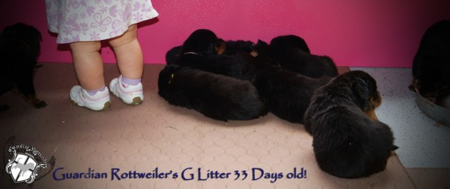 glitter33days10