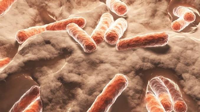 Resultado de imagen para microbioma humano