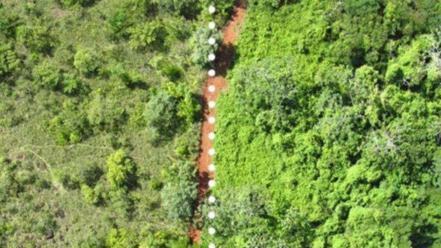 Resultado de imagen para Doce mil toneladas de desperdicios de naranjas revivieron un bosque en Costa Rica