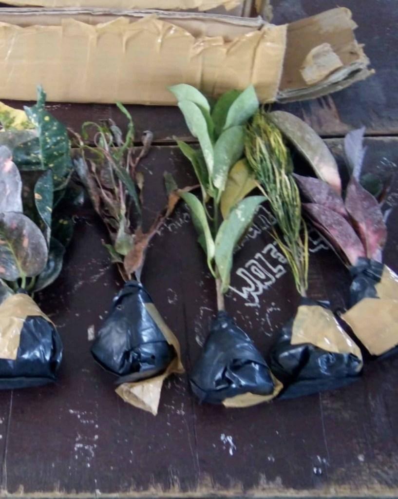 cara kirim tanaman lewat pesawat
