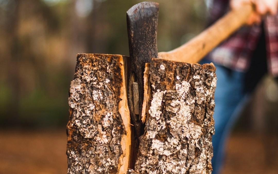 No alla proroga del taglio delle latifoglie: la Regione Piemonte danneggia le sue foreste tagliando gli alberi durante il periodo vegetativo