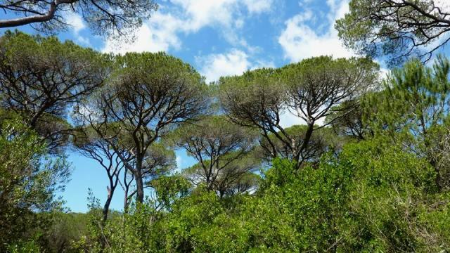 La foresta senza pace. Altri tagli nelle Pinete Grossetane durante il periodo di riproduzione della fauna