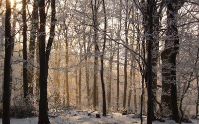 La storia di un bosco