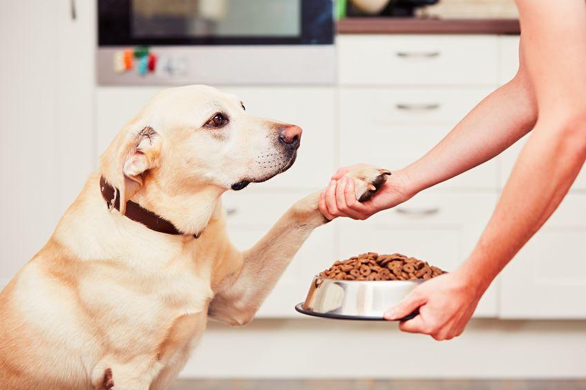 alimentando um cachorro
