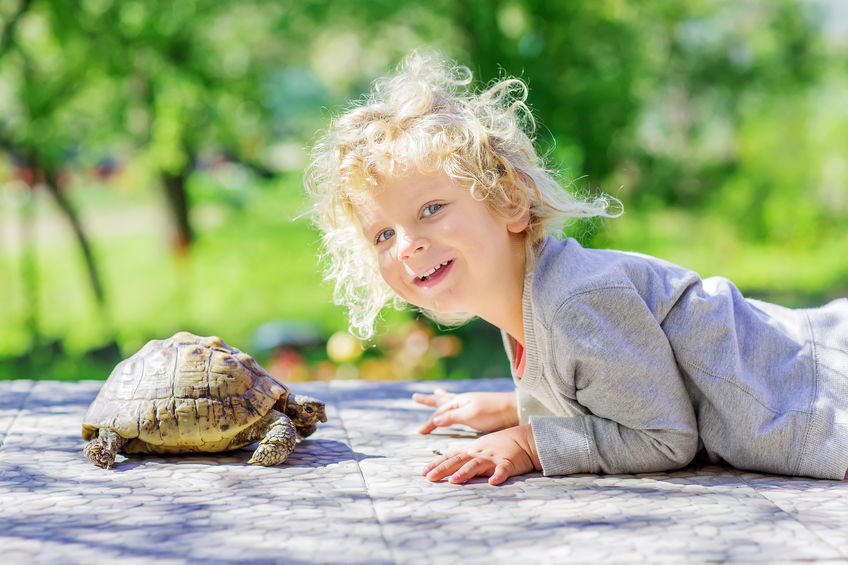 little boy with a turtle