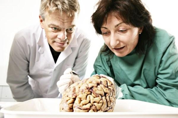 Nobel da Medicina - Guia BSB.net