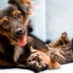Pet Friendly: Piccolo Emporium abre as portas para todos os integrantes da família