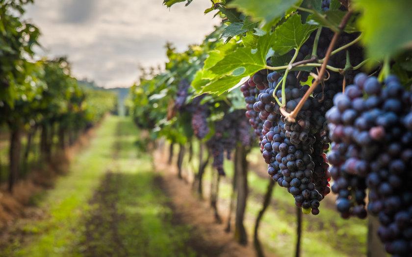 10 vinícolas imperdíveis para conhecer em São Paulo