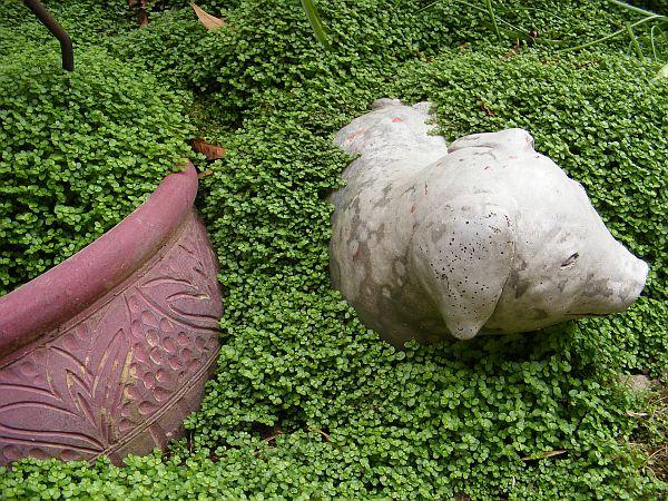 Piante tappezzanti: 5 specie  Guida Giardino