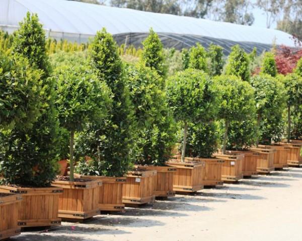 5 piante che sopportano la siccità | Guida Giardino