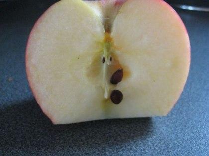 semi di mela
