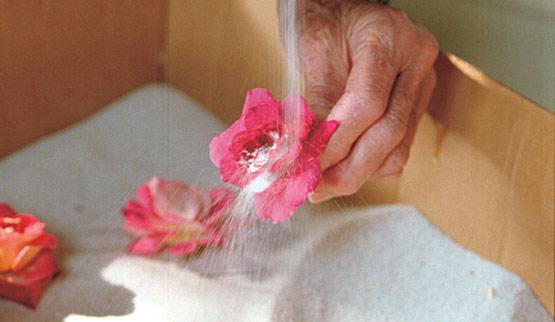 essiccare i fiori con la sabbia