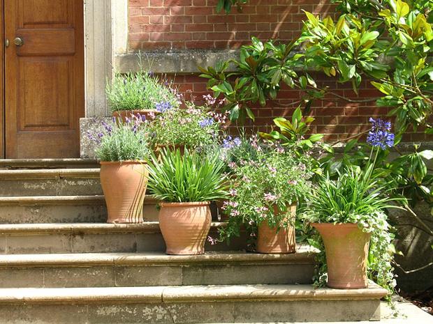 piante fiorito a decorare l'ingresso