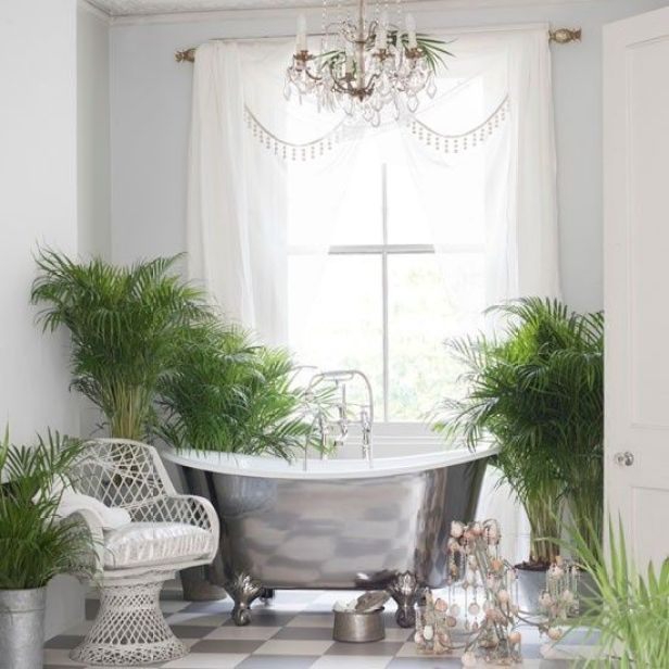 Decorare gli interni con le piante tropicali