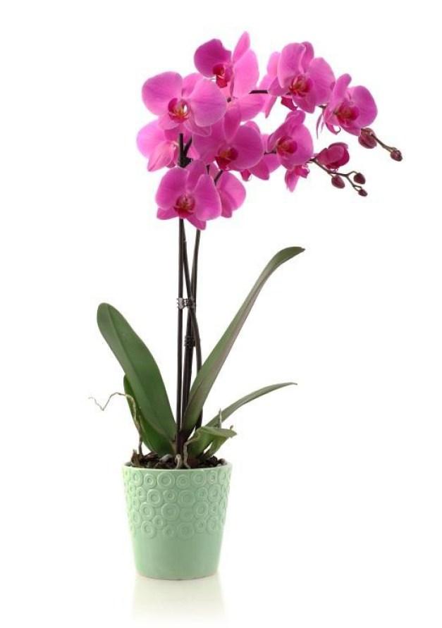 Le orchidee sono molto sensibili all'acqua e soprattutto ai ristagni idrici; necessitano di un alto tasso di umidità
