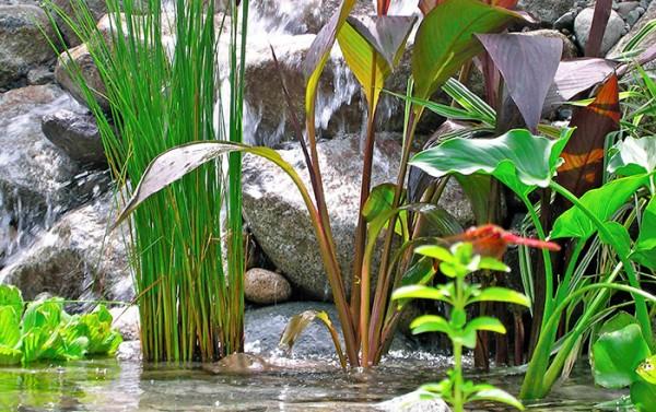 Piante acquatiche perfette per realizzare un laghetto in giardino