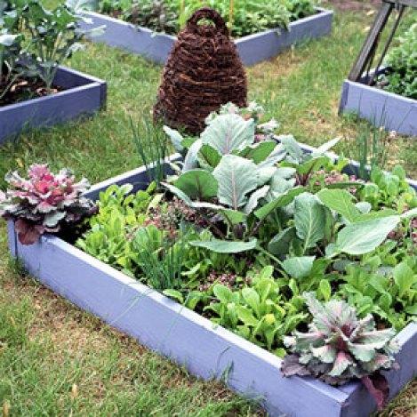 coltivazione in letto rialzato