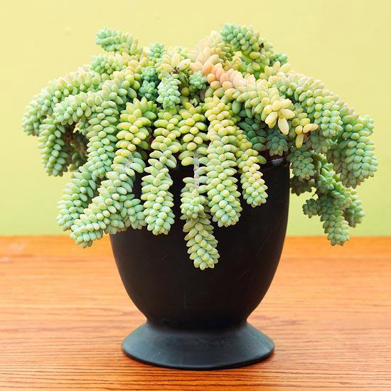 8 piante grasse molto decorative e ideali per la - Terriccio fertile ...
