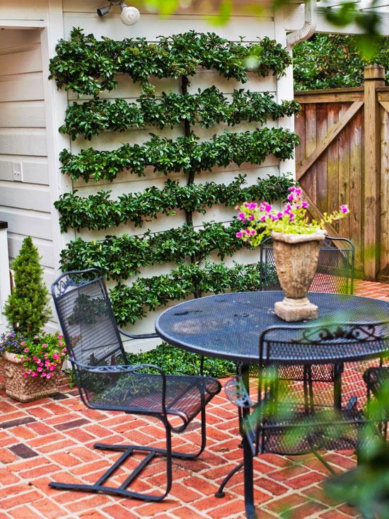 piantare un albero o un arbusto contro una parete, in modo da creare un muro verde