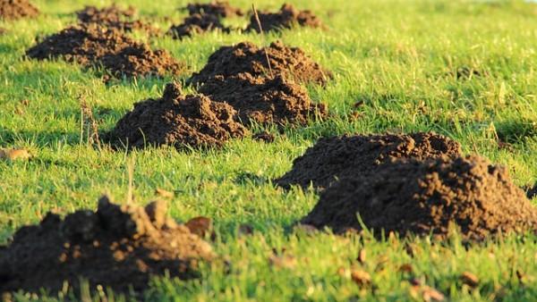 terra da coltivazione