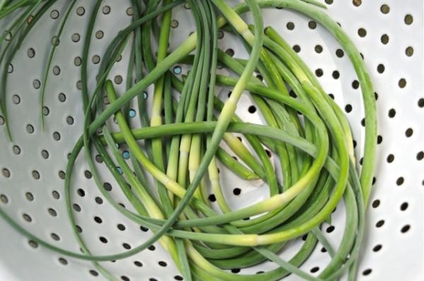 l'aglio produce un peduncolo che se tagliato quando è ancora tenero può essere utilizzato per la preparazione di insalate