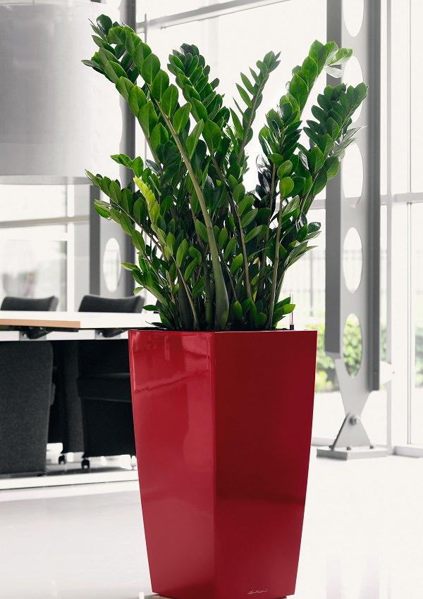 18 piante d appartamento che non richiedono manutenzione for Pianta di cera