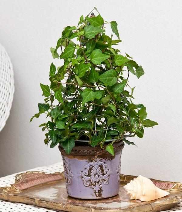 18 piante d appartamento che non richiedono manutenzione for Plantas interior sin luz