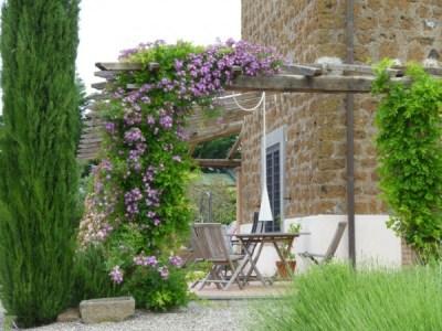 La Clematis è una rampicante spettacolare che fiorisce in abbondanza per tutta la primavera
