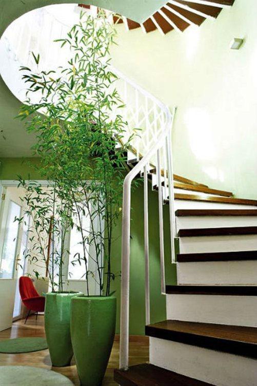 Piante Grasse Grandi Da Interno.12 Stupende Piante D Appartamento Di Grandi Dimensioni Guida Giardino