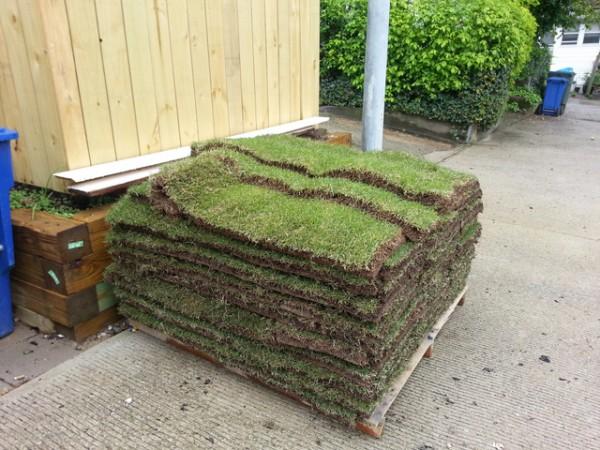 zoysia tenuifolia il manto erboso che non necessita manutenzione guida giardino. Black Bedroom Furniture Sets. Home Design Ideas