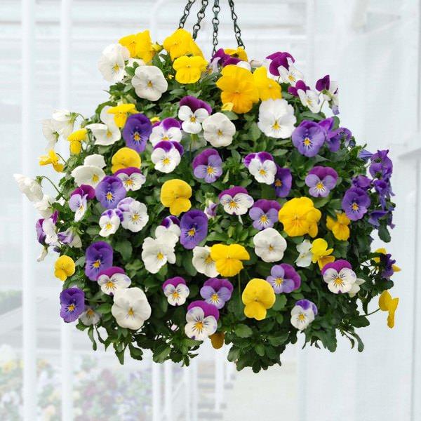 las-mejores-plantas-para-cestas-colgantes-14