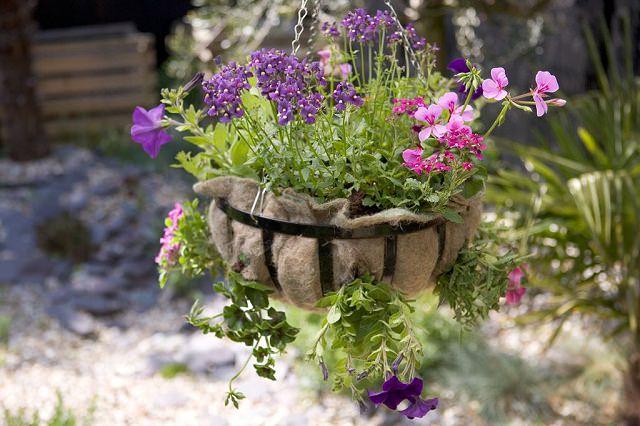 18 piante ideali per la coltivazione in vasi appesi - Calibrachoa perenne ...