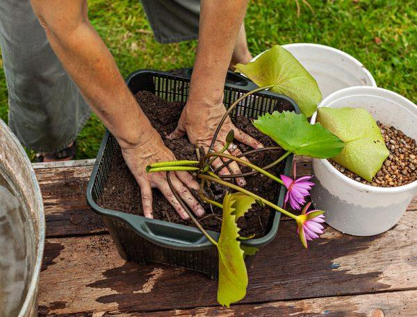 Preparare il terreno, una fase importante per sistemare al meglio le piante