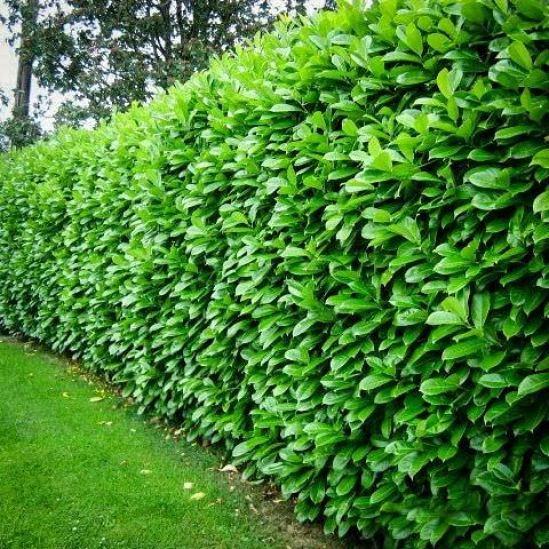 8 modi per aumentare la privacy del giardino utilizzando le piante ...