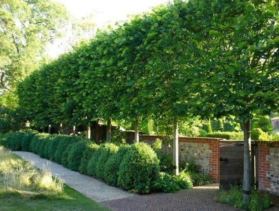 Una fila di alberi può sostituire un alto e soffocante muro di cinta; un'idea adatta nel caso si desideri aumentare la privacy senza realizzare uno schermo visivo totale