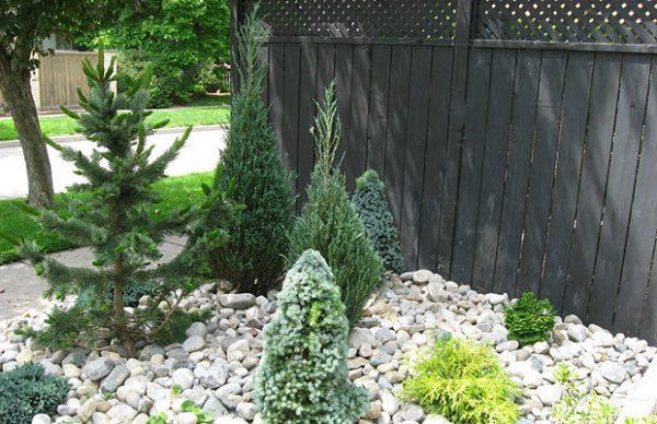 Le conifere sono alberi che crescono lentamente ma inesorabilmente, per questo è importante valutare al meglio la zona di piantumazione