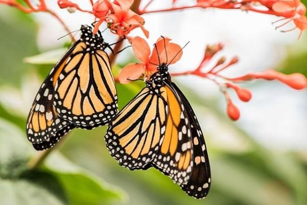 Bellissime farfalle colorate posate sui fiori