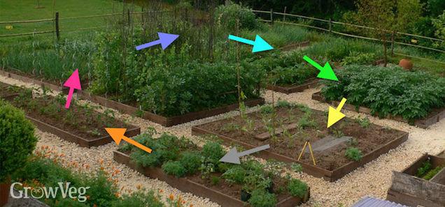Coltivando i diversi ortaggi a rotazione ogni anno, sarà molto più semplice evitare la proliferazione di parassiti legati ad una specifica coltura e, inoltre, questo accorgimento ridurre la necessità di fertilizzanti