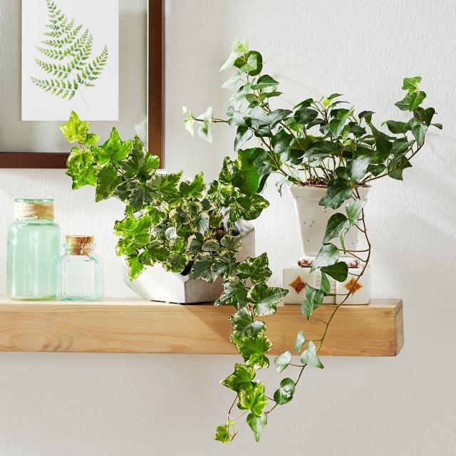 Mejora la piel seca con estas plantas de interior