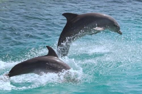 Avistamiento de cetáceos en Tenerife - avistamiento_de_cetáceos_