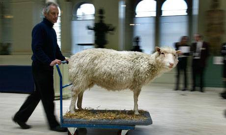 ¿Qué ha sido de la Oveja Dolly?