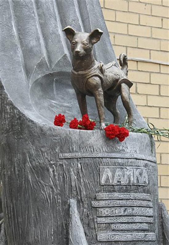 El monumento de Laika - maltrato1