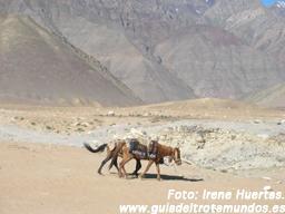 Escapando del monzón: Entre Ladakh y Kashmir