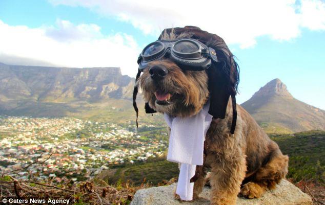 El asombroso viaje de Oscar, el perrito rescatado de la calle
