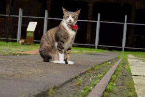 Houtong: el barrio de los gatos en Taiwán - houtong-5-300x201