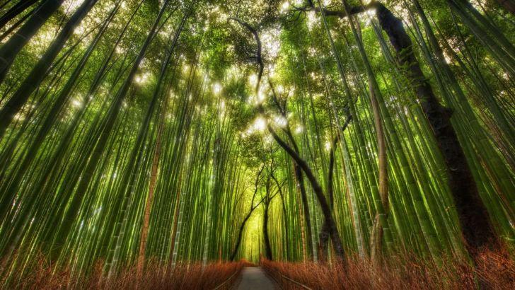 El bosque de bambú