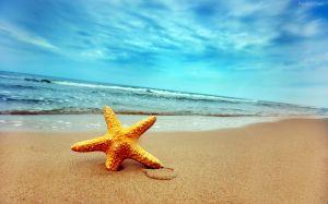 La Playa de las Estrellas - playa-estrellas-de-mar-1-300x187