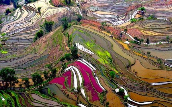 Las terrazas multicolor de Yunnan